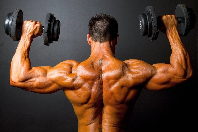 How to build shoulders (deltoid muscles)?  Exercise & Training